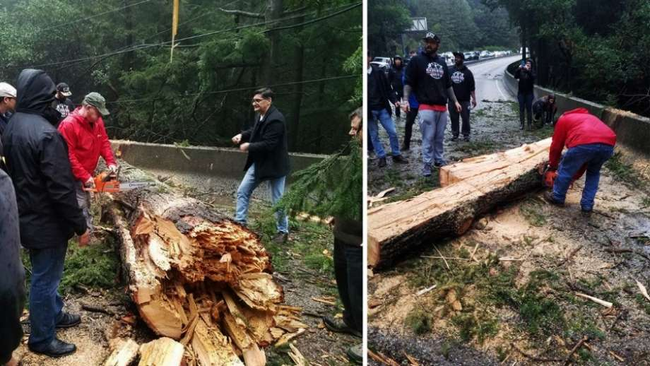 Commuters chop redwood tree